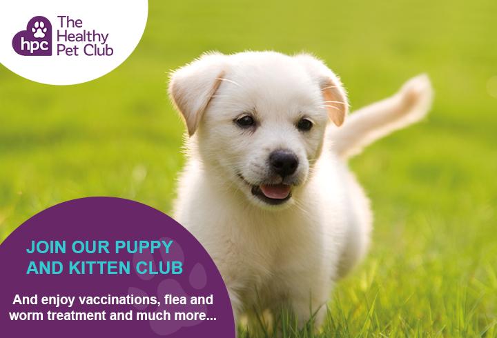 Healthy Pet Club puppies